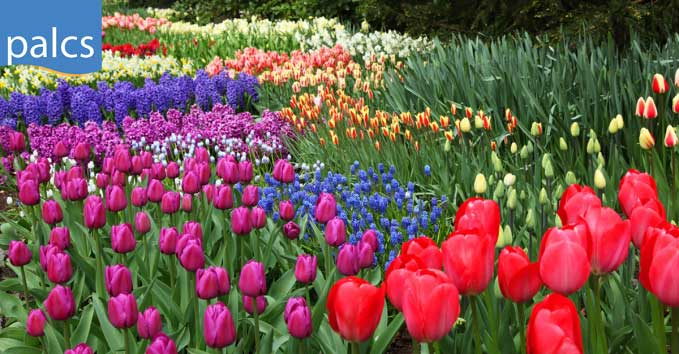 PALCS Spring Break, a field of flowers