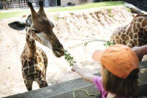 PALCS Field Trips - Zoo