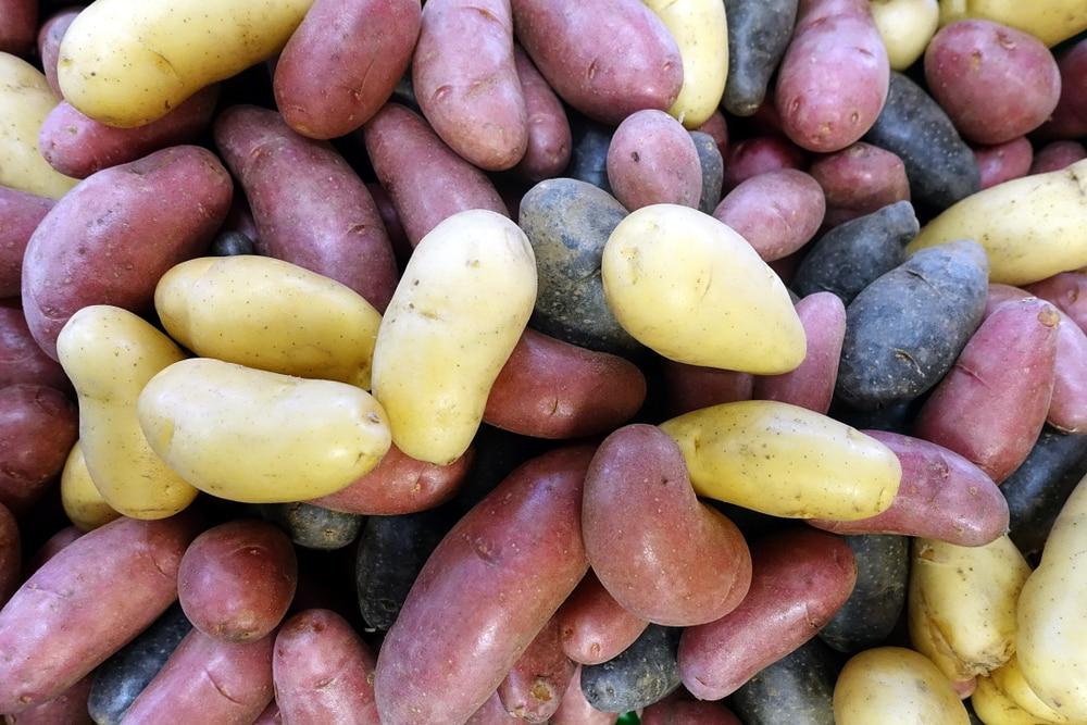 Ebensburg potatofest festival